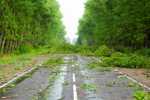 5-Point Checklist for Getting Back to Normal  After a Hurricane